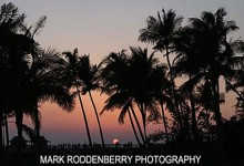 Southwest Florida Sunset and Palm Trees | Weddings Made Simple DISC Temperament Assessment, Pre and Post Marriage Coaching, Wedding Officiants and Wedding Ministers Naples Florida